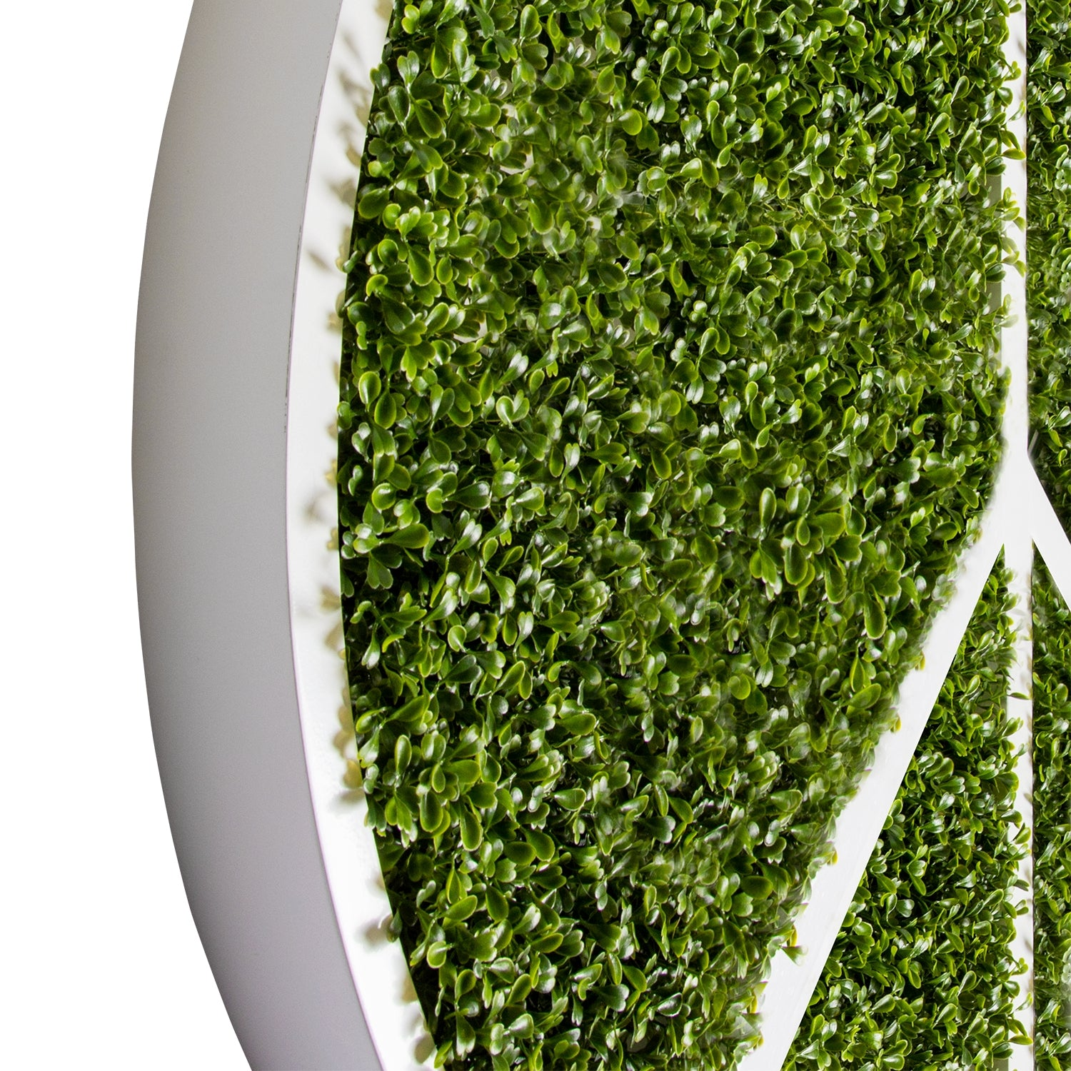 Green Wall, Peace w/ Boxwood