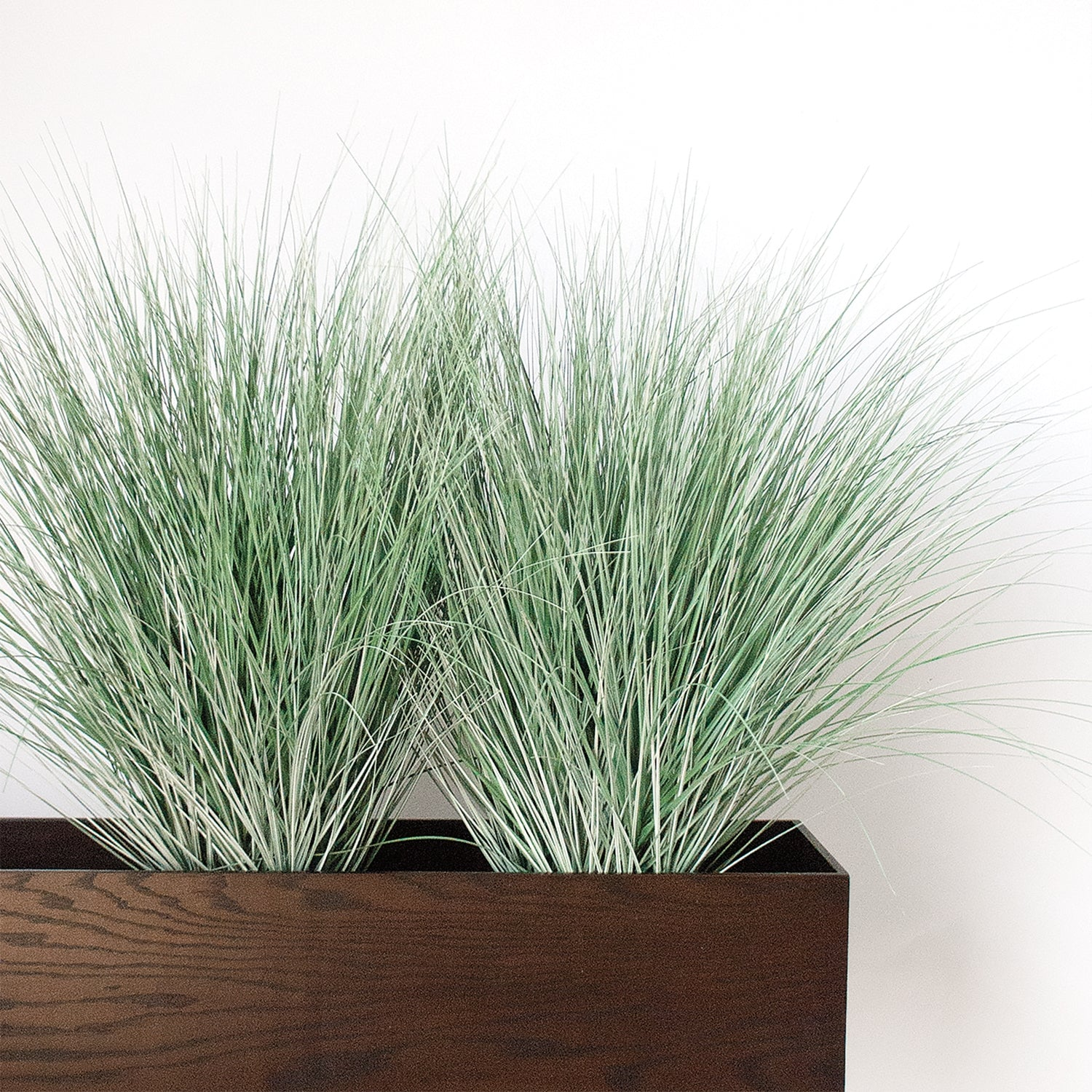 Grass: Bear Grass in DK Walnut Rectangle Planter