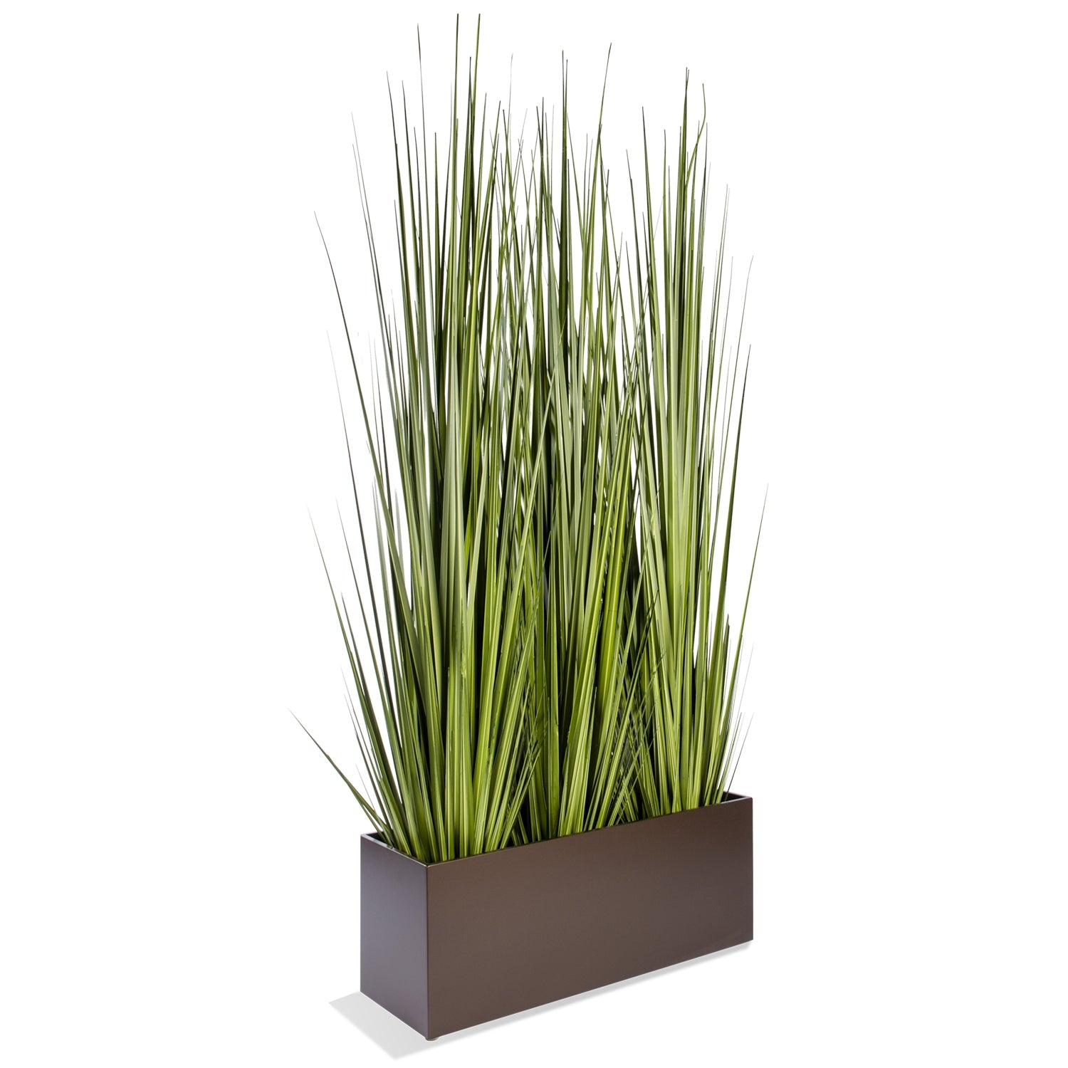 "Grass: Century Grass in Rectangle Planter, 38""OL"