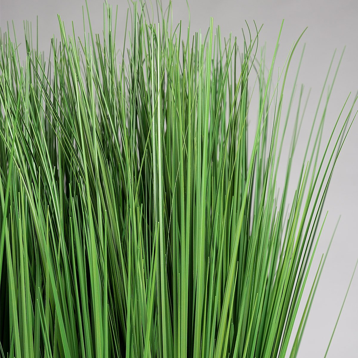 Grass: Outdoor in Urbano Rectangle, LG