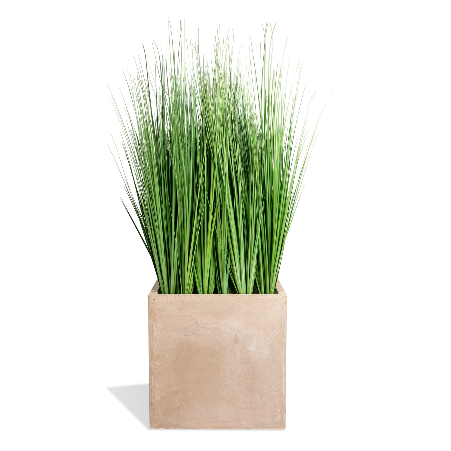 Grass: Outdoor in Urbano Square, LG