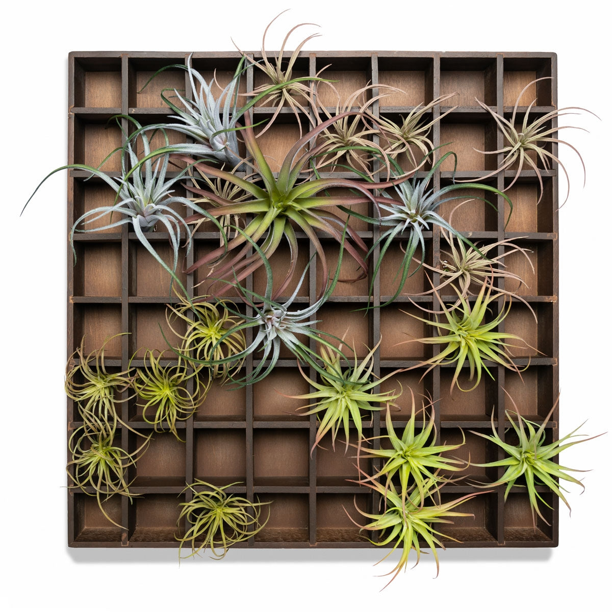 Green Wall, Pixelated Air Plants, 64 Compartments