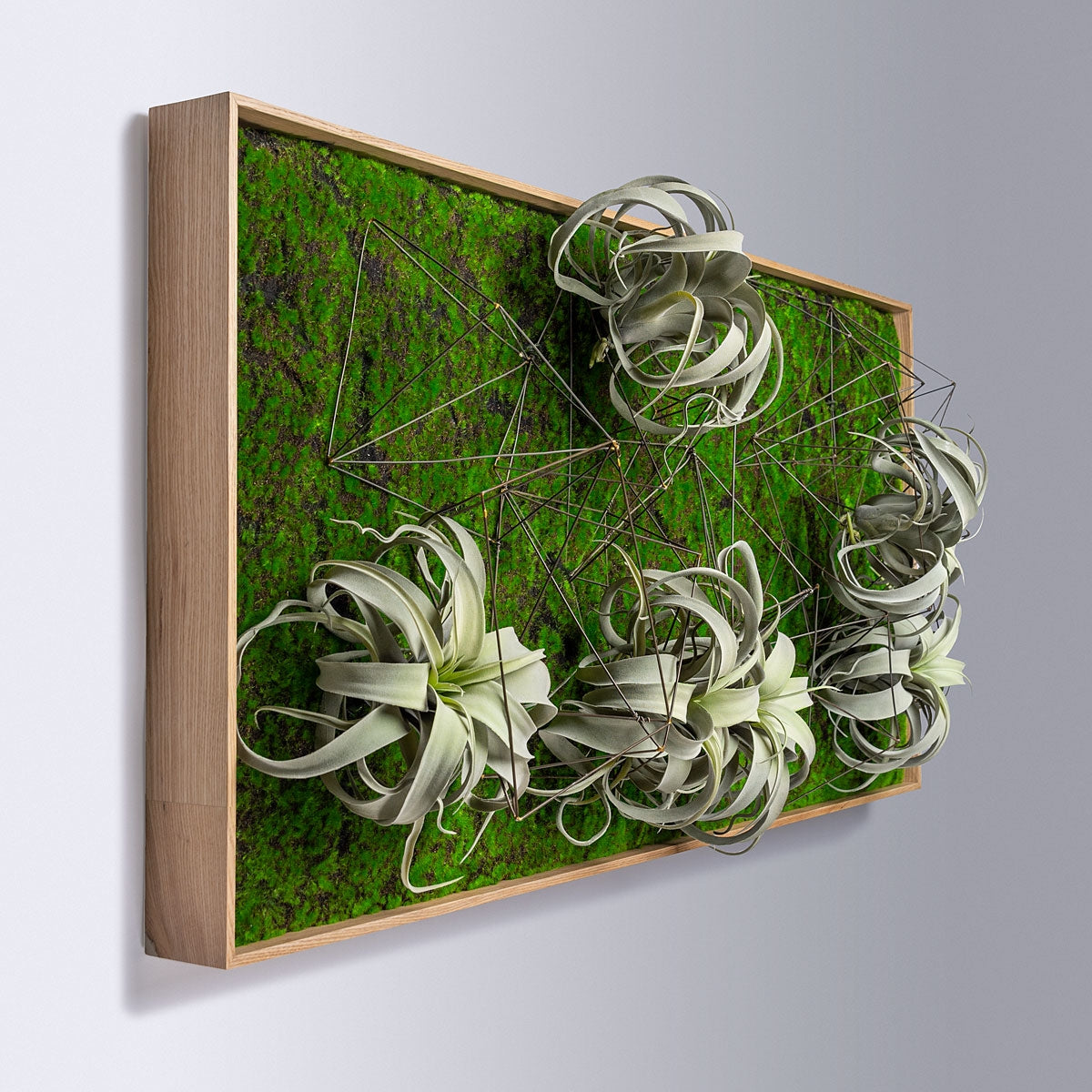 Green Wall, Wire Crystals & Xerographica