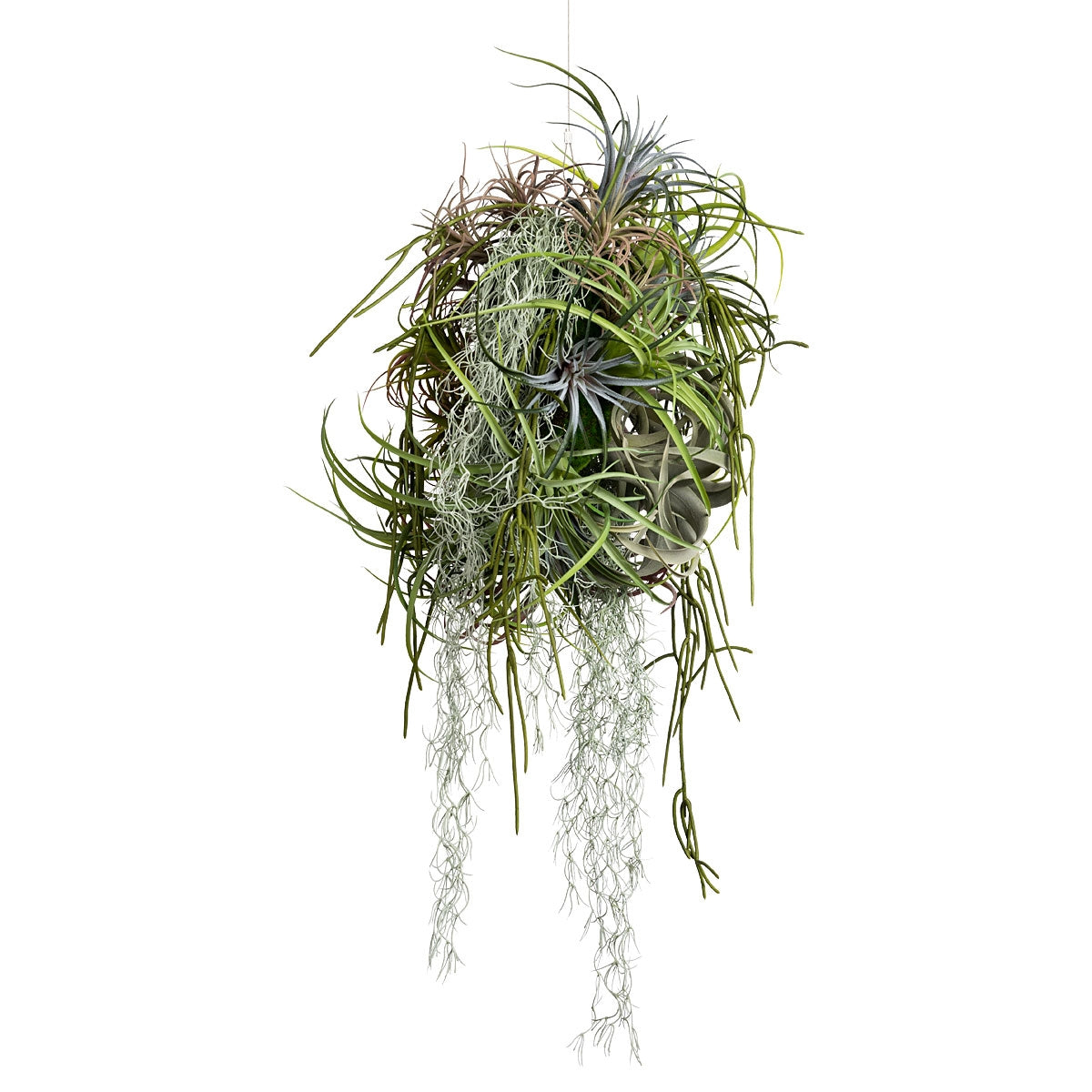 Floating Garden: Tillandsia Mix SM