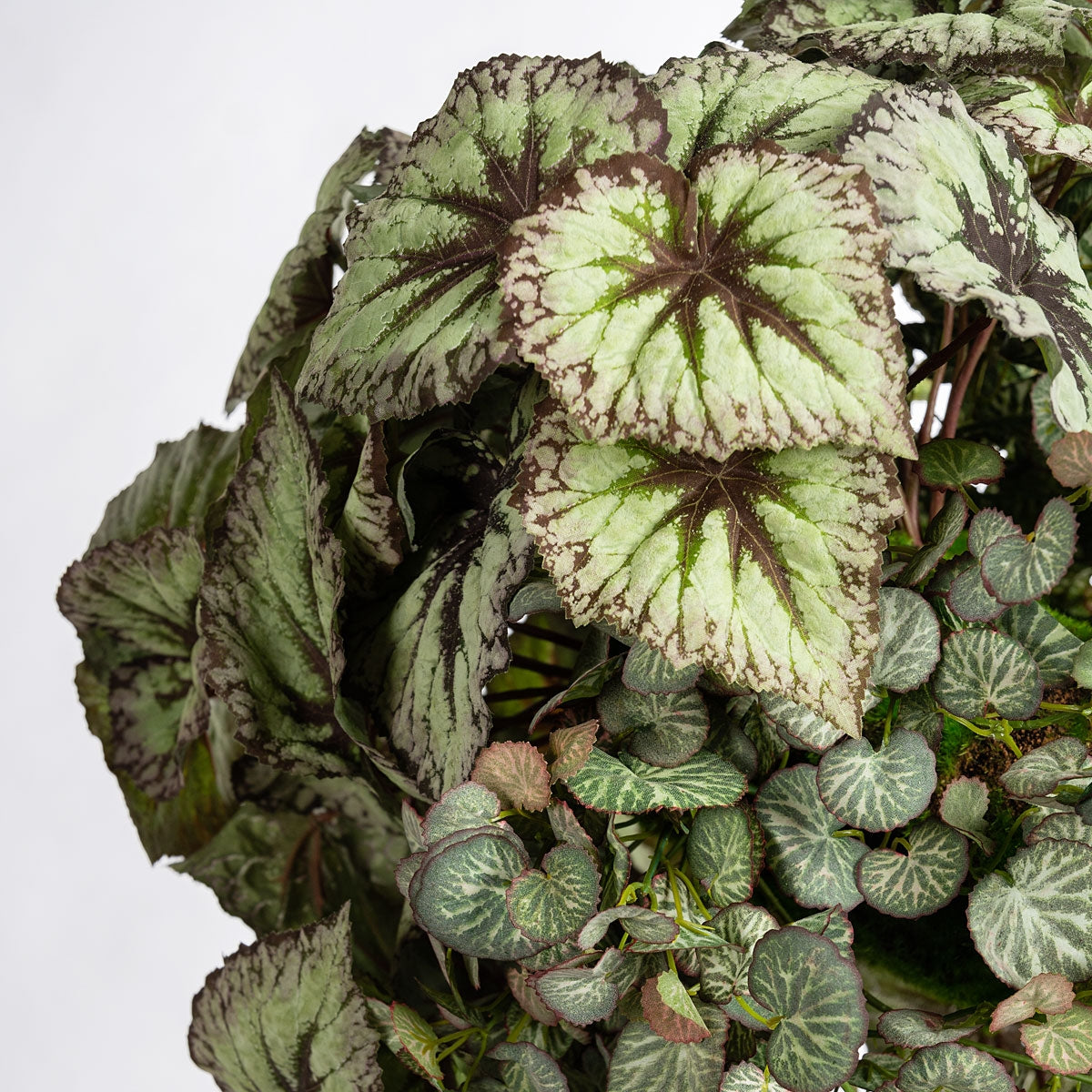 Floating Garden: Begonia Mix