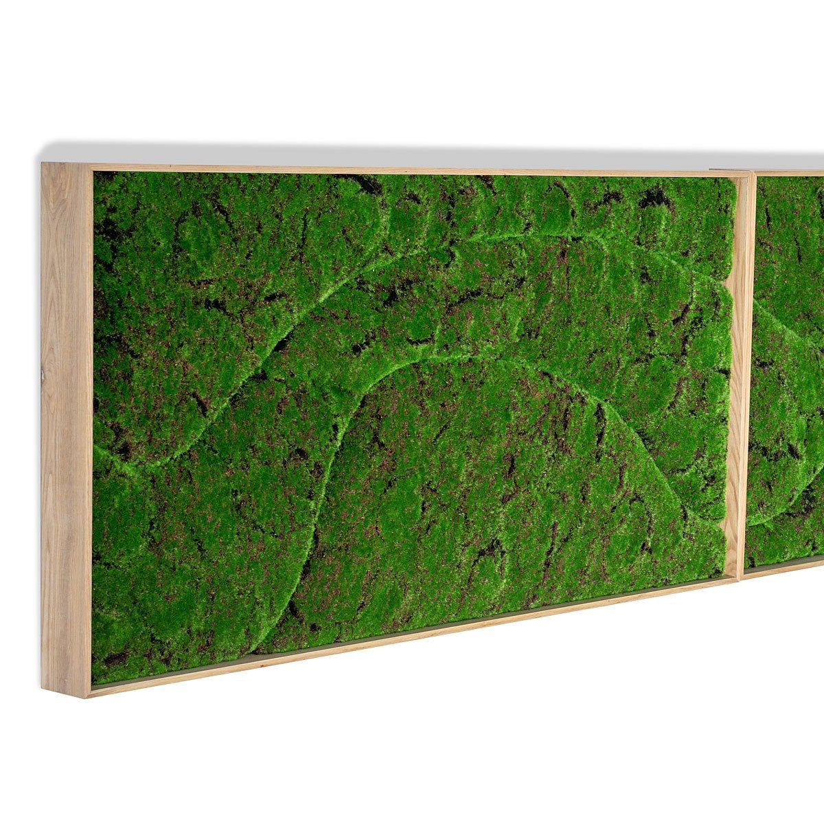 Green Wall, 'New Wave A'