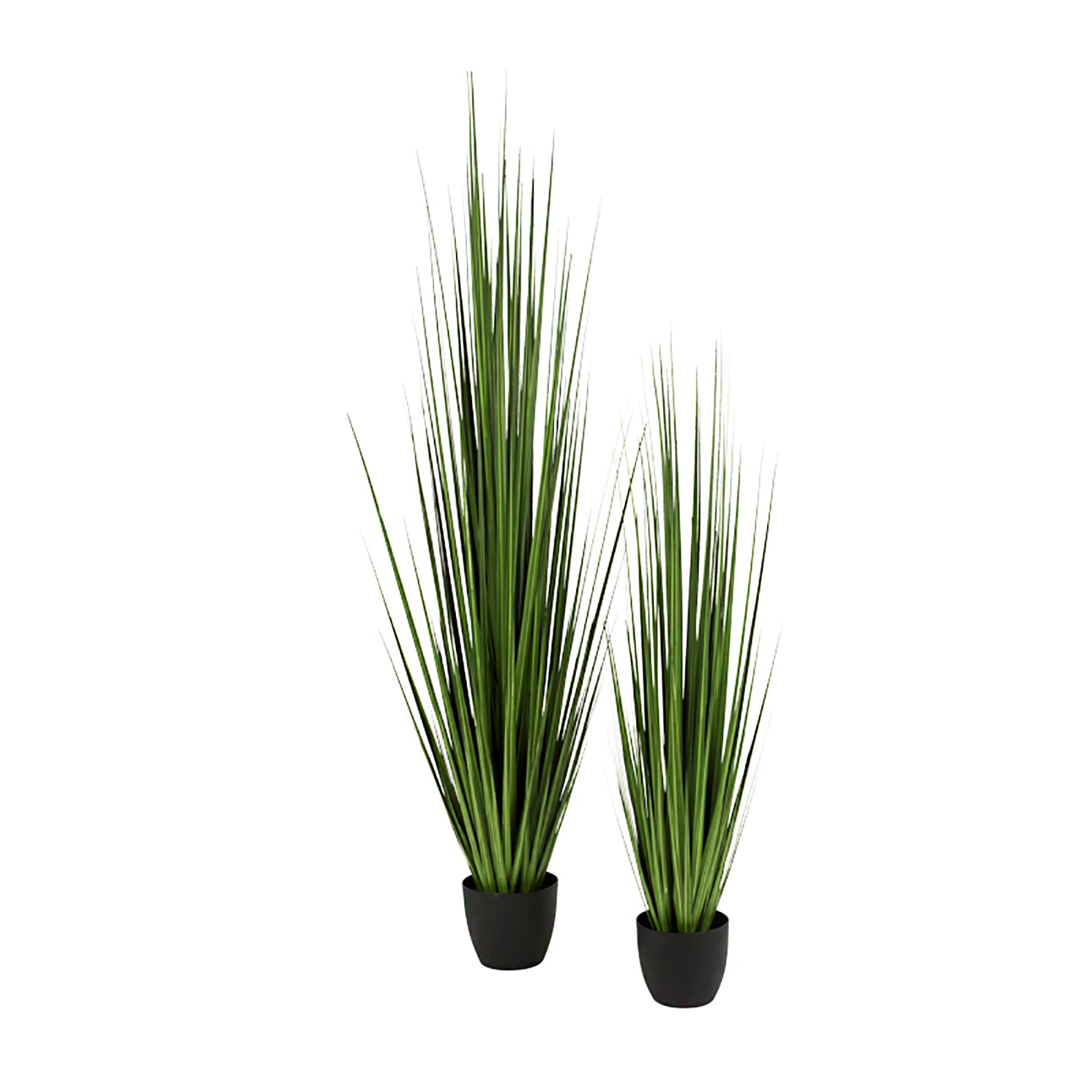 "Grass: Century 86""H, Potted"