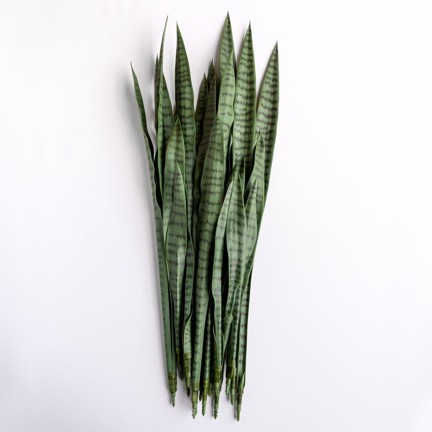 "Outdoor Sansevieria Green Plant Set Unpotted, 34""H"