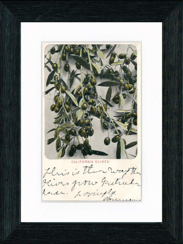 Vintage Postcard Front - California Olives