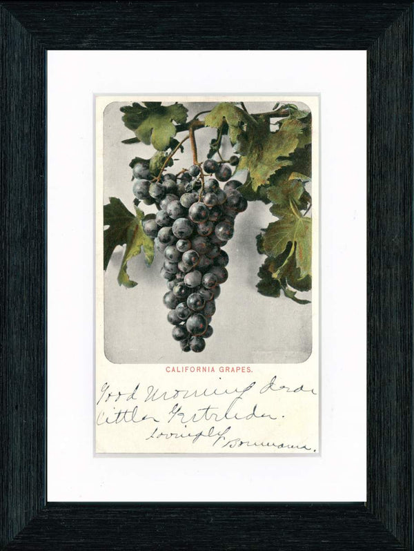 Vintage Postcard Front - California Grapes