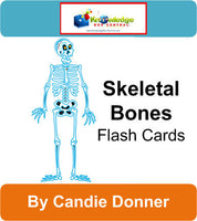 Skeletal Bones Flash Cards