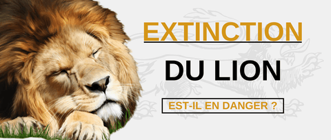 Extinction lion en danger