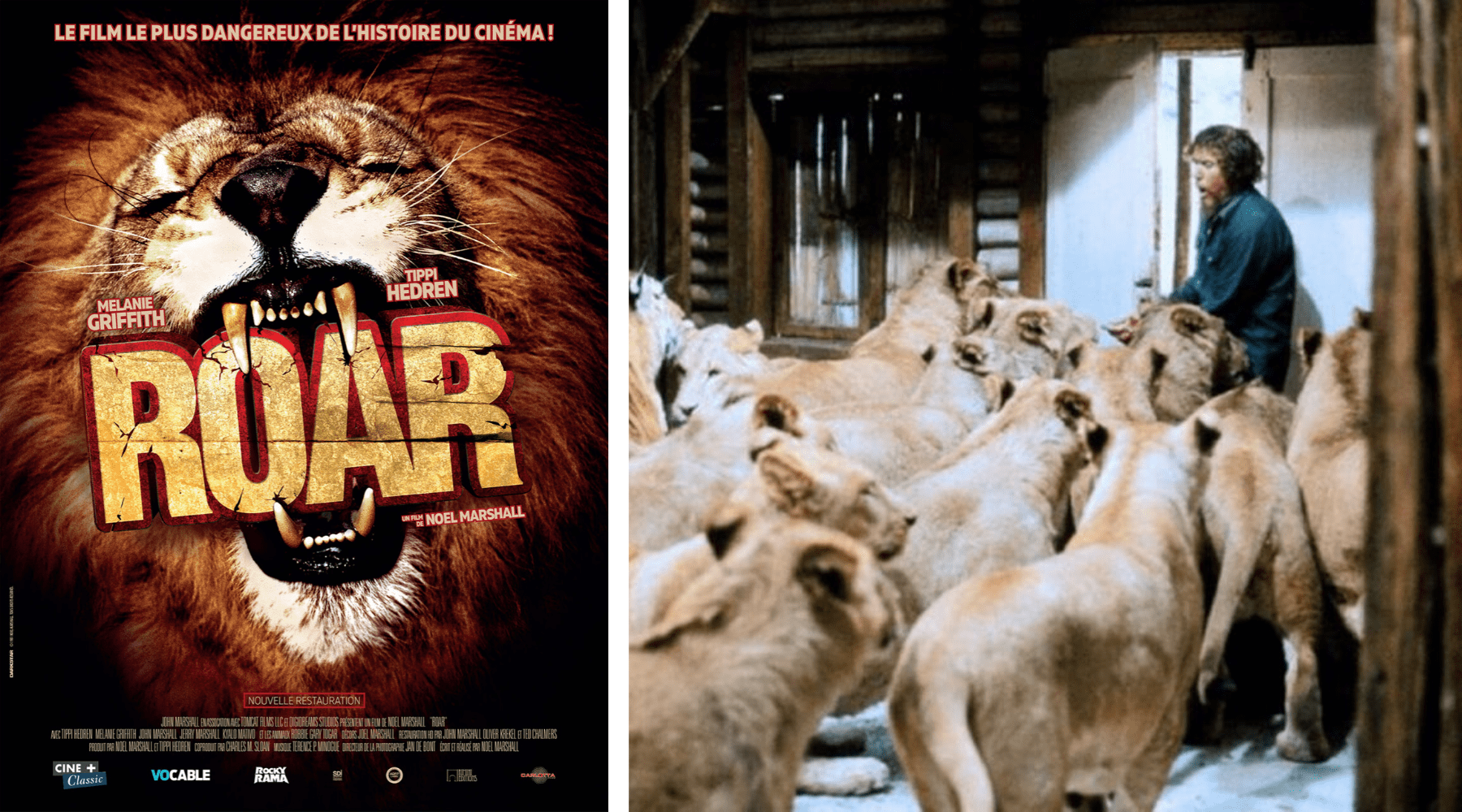 Roar film lion.