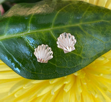 Load image into Gallery viewer, Scallop Beach Shell Earrings