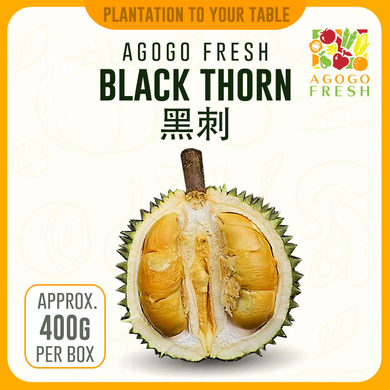 Durian Black Thorn 黑刺