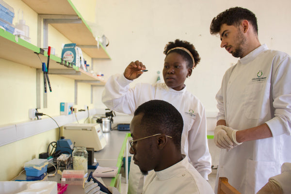 Scientists working in the Cameroon node