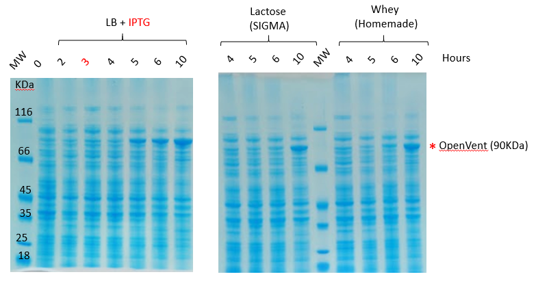 Comparison of expression of OpenVent DNA polymerase using IPTG, lactose and homemade whey as inducers