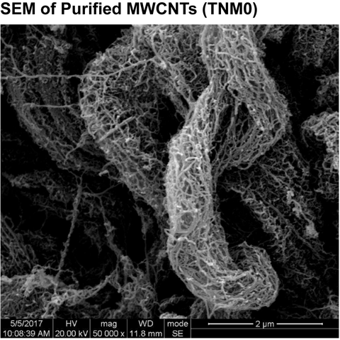 SEM OF Purified MWCNTs (TNM0)