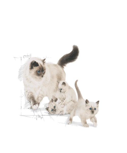 Royal Canin Babycat Milk - Pet Mall