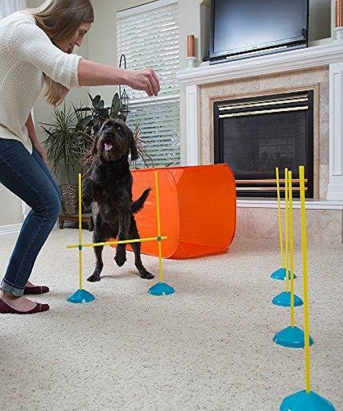 Outward Hound Zip & Zoom Indoor Agility Kit - Pet Mall