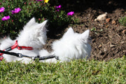 ROGZ AlleyCat Cat Harness - Pet Mall