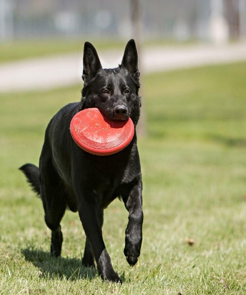 KONG Flyer Disk Frisbee Dog Toy - Pet Mall