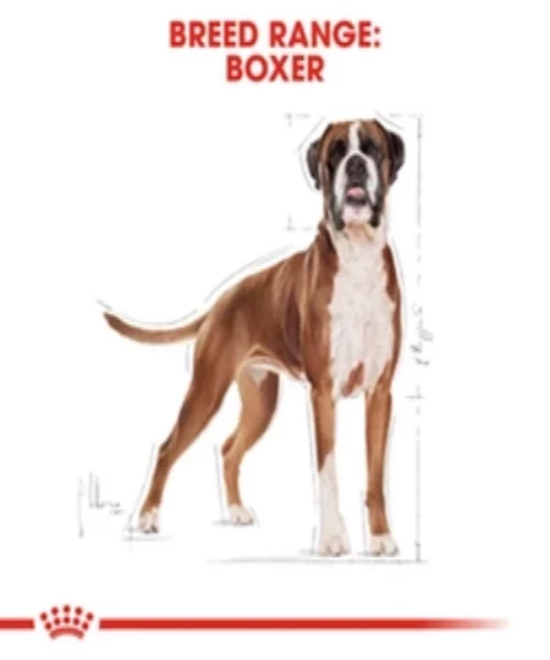 Royal Canin Boxer Adult Dog Food 12KG - Pet Mall