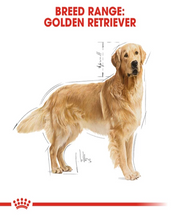 Royal Canin Golden Retriever Adult Dog Food 12KG - Pet Mall