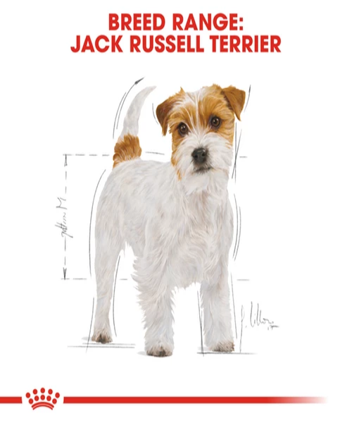 Royal Canin Jack Russell Adult Dog Food - Pet Mall