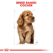 Royal Canin Cocker Puppy Dog Food 3 KG - Pet Mall