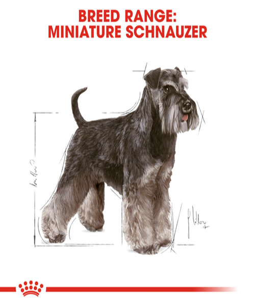 Royal Canin Miniature Schnauzer Adult Dog Food - Pet Mall
