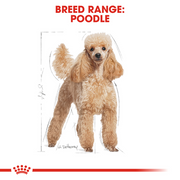 Royal Canin Poodle Adult Dog Food - Pet Mall
