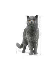 Royal Canin British Shorthair Adult Cat Food - Pet Mall