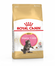 Royal Canin Maine Coon Kitten Food - Pet Mall
