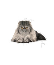 Royal Canin Persian Adult Cat Food - Pet Mall