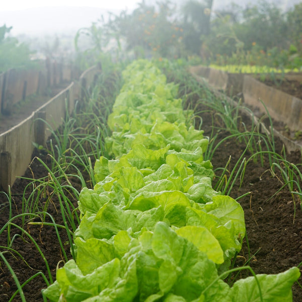 Everything You Need To Know About Crop Rotation