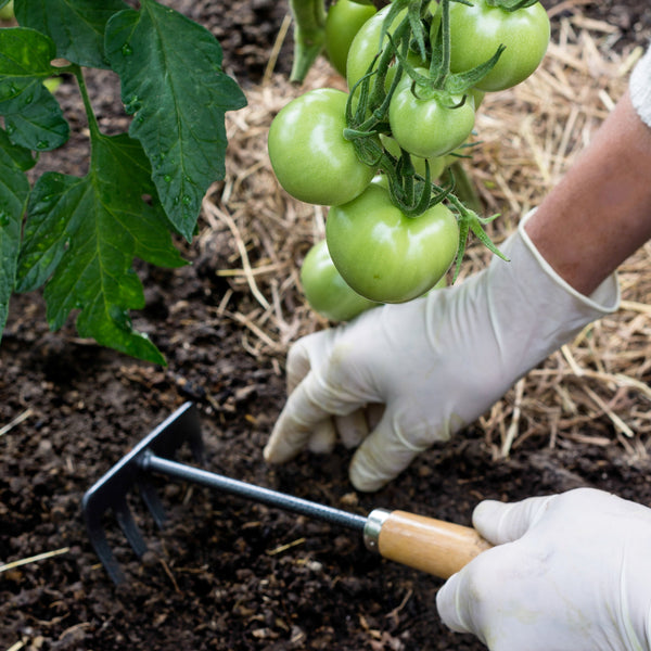 Gardening Practices To Help You Prevent Plant Diseases