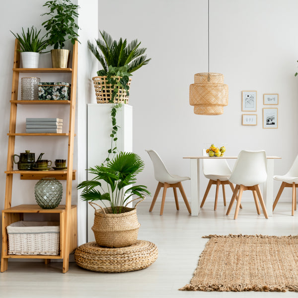 How To Style Houseplants In Your Home!
