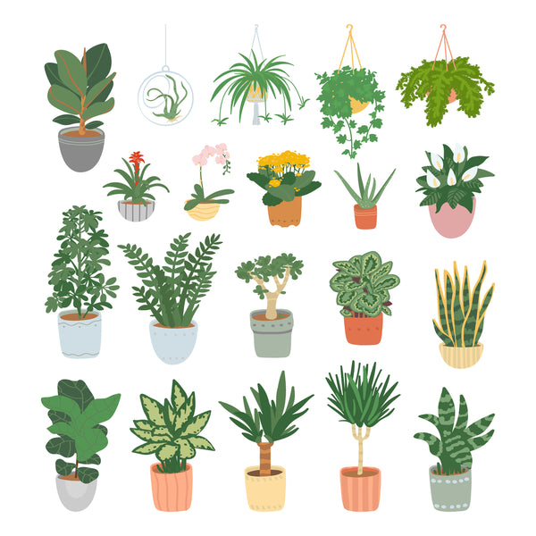 How To Care For Your Houseplants In The Winter Months!