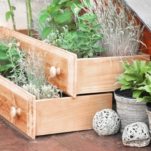 10 Reasons Why You Should Start Container Gardening