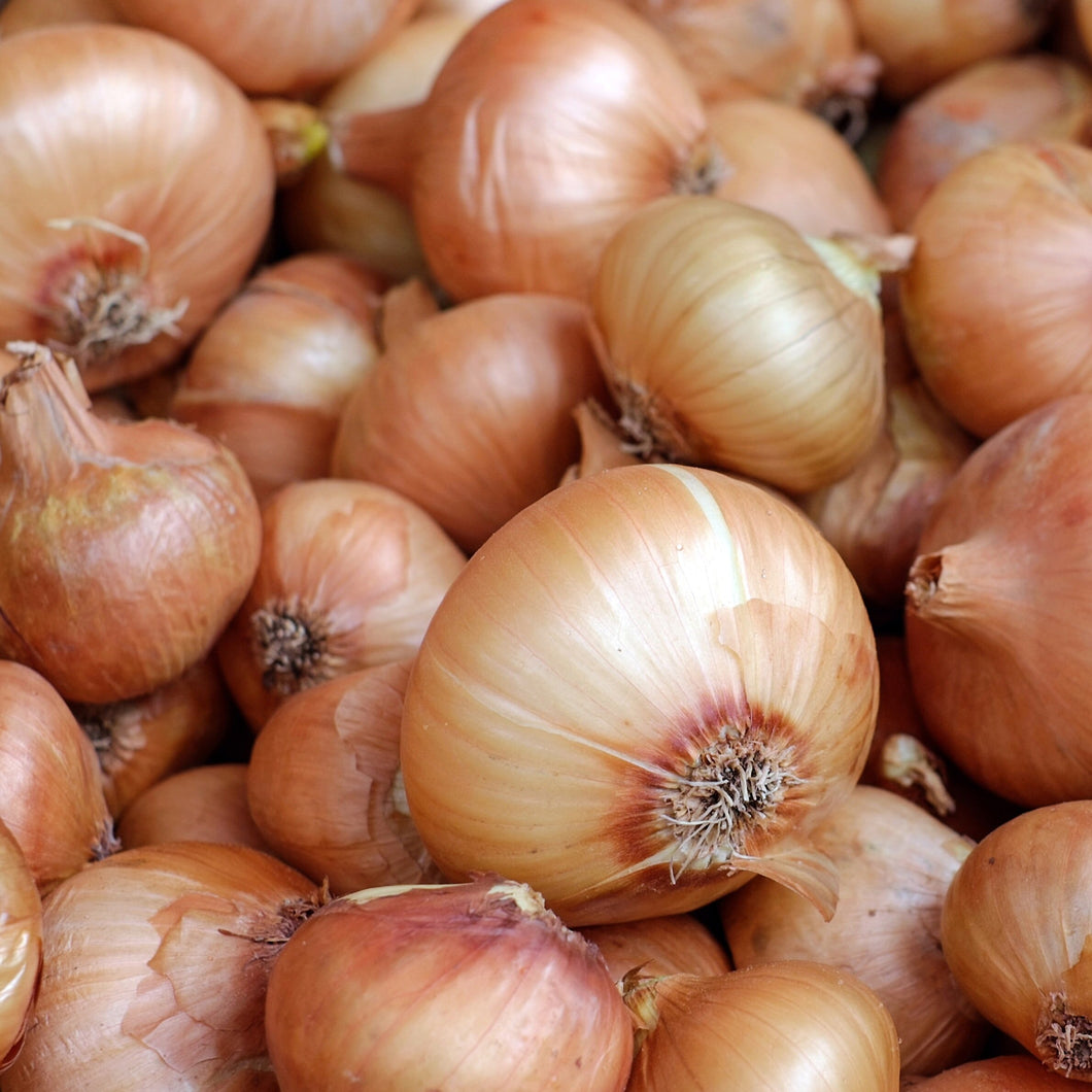 Organic Onion Vegetable Seeds - 40 Per Pack