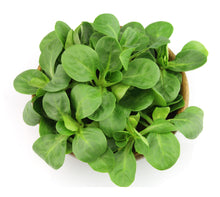 Load image into Gallery viewer, Organic Lamb's Lettuce Seeds-Seeds-Seed n Sow