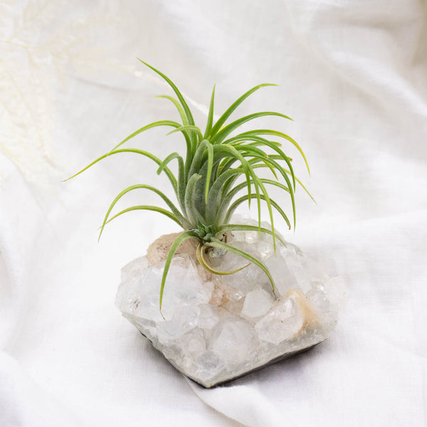 Crystal Air Plant | Apophyllite with Stilbite
