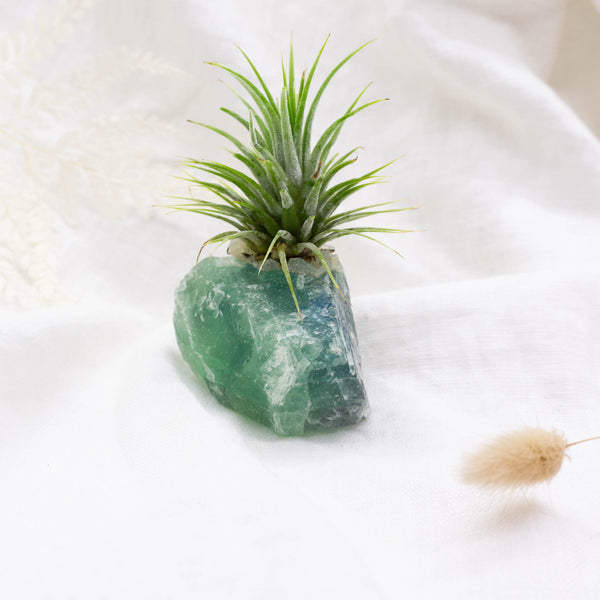 Crystal Air Plant | Fluorite