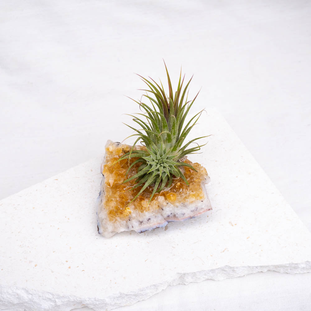 citrine crystal air plant