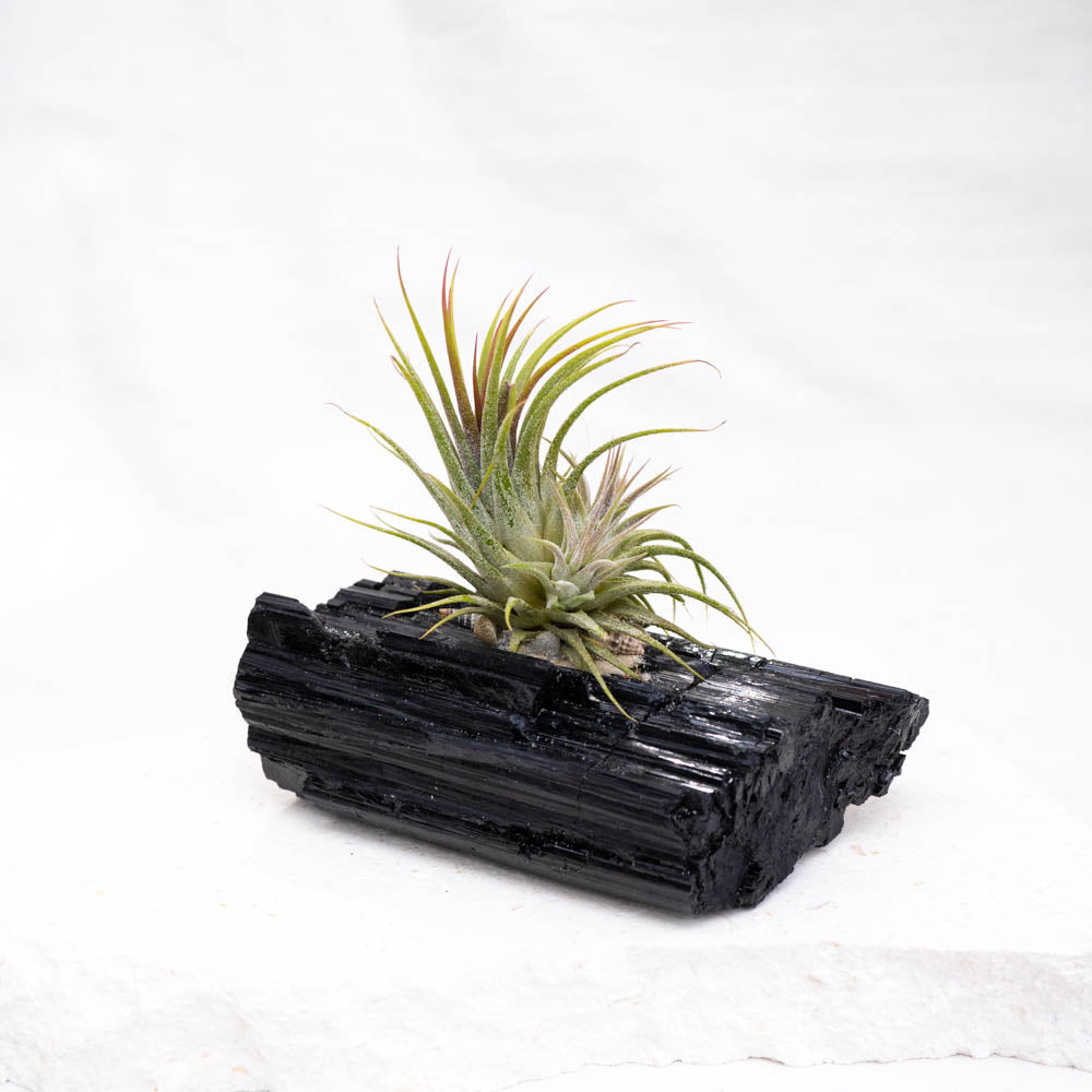 crystal air plant black tourmaline