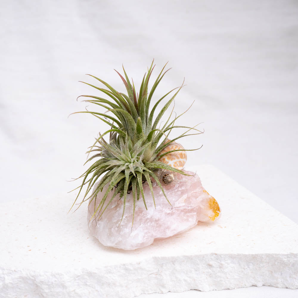 crystal air plant rose quartz
