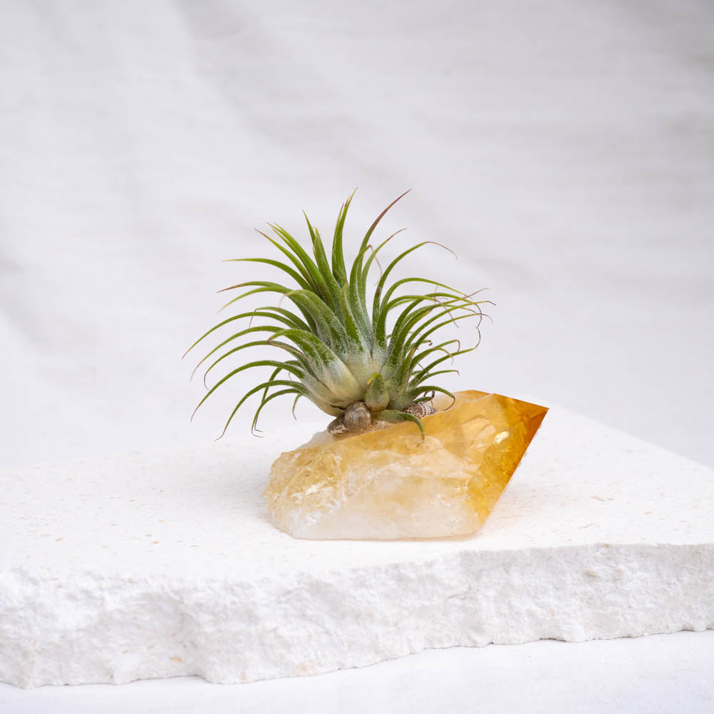 crystal air plant citrine