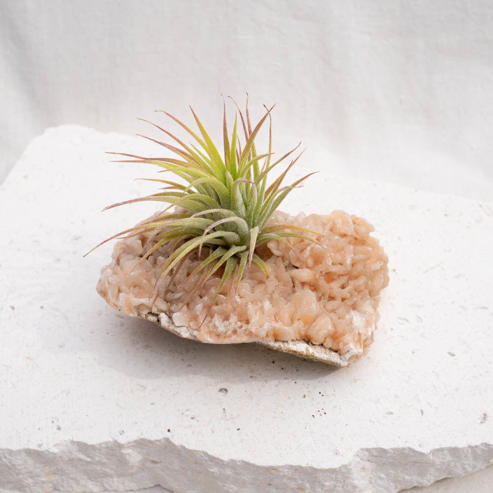 peach stilbite crystal air plant