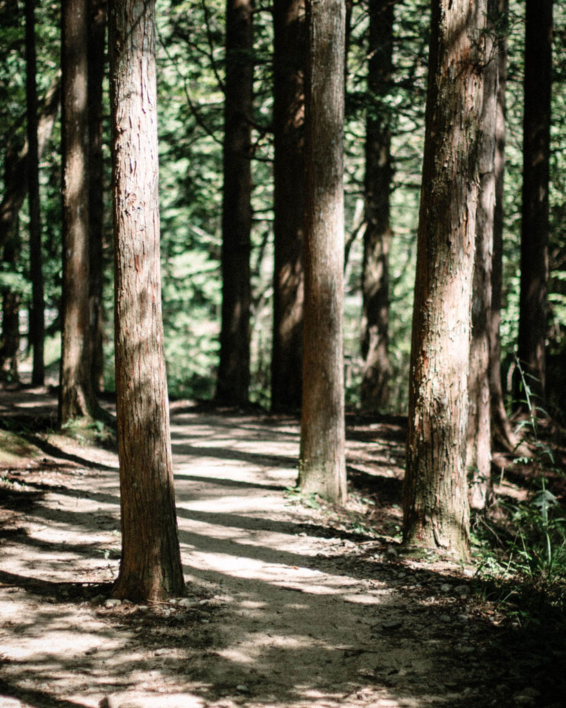 Forest Bathing – three ways to add it into your self-care ritual